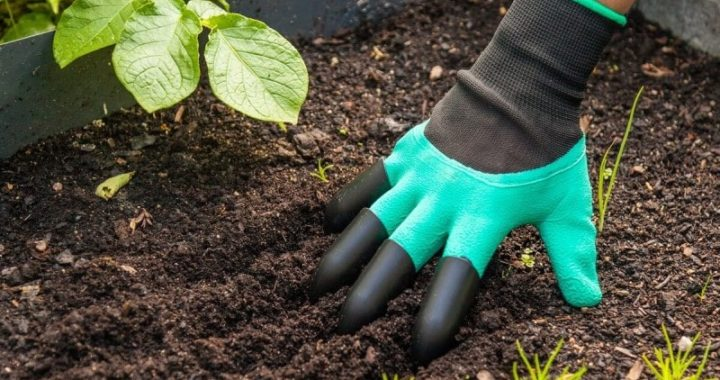 Using the Right Gardening Tools